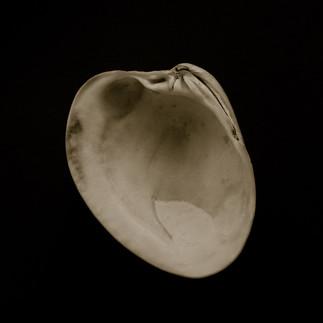 mf shells-4.jpg