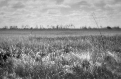 Land-14.jpg