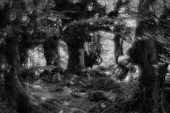 Forest-27.jpg