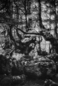 Forest-28.jpg
