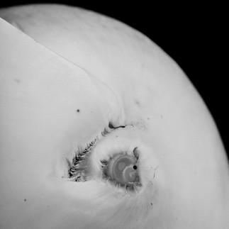 Bad moon-2-2.jpg