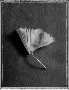 Polaroid-5.jpg