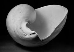 shell-7.jpg