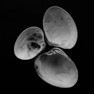 mf shells-2.jpg