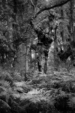 Forest-38.jpg