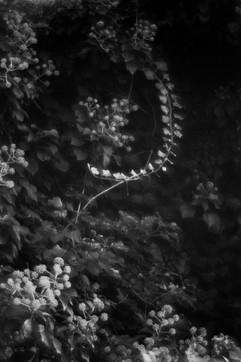 Botanica-4.jpg