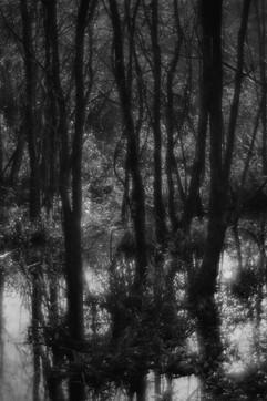 Forest-15.jpg