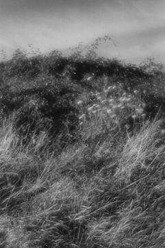 Land-10.jpg