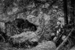 Forest-34.jpg