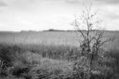 Land-15.jpg