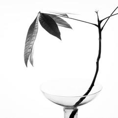 botanica-11.jpg
