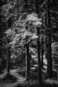 Forest-24.jpg