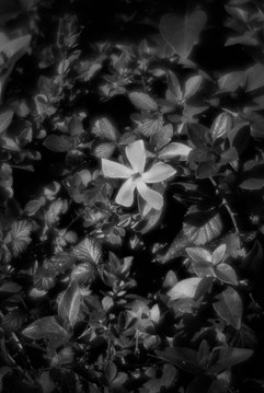 Botanica-16.jpg