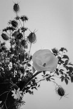 botanica-6.jpg