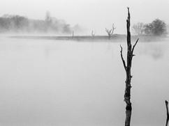 Niebla-4.jpg