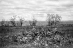 Land-11.jpg