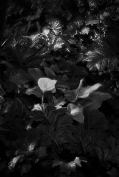 Botanica-15.jpg