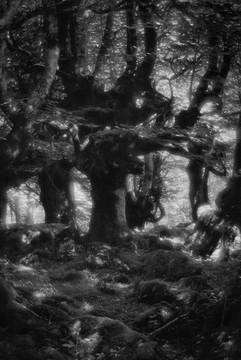 Forest-26.jpg