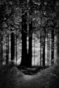 Forest-9.jpg