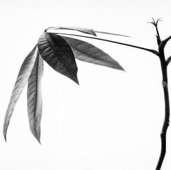 botanica-10.jpg