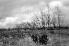 Land-18.jpg