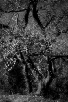 Forest-23.jpg