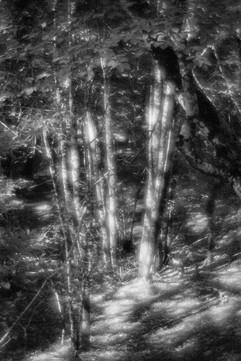 Forest-32.jpg