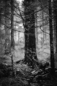 Forest-29.jpg