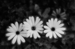 Botanica-2.jpg