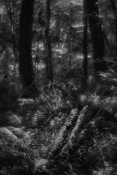 Forest-43.jpg
