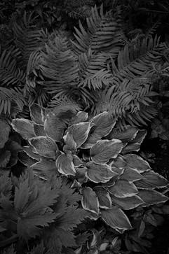 Botanica-1.jpg