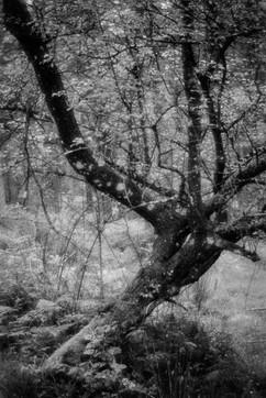 Forest-37.jpg