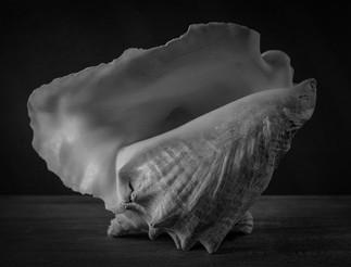 WP shell-1.jpg