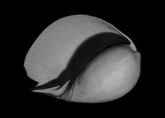 Shell-2.jpg