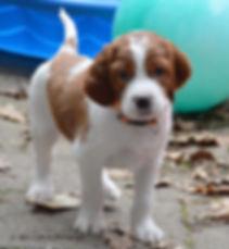 DSC_0049 orange puppy.jpg