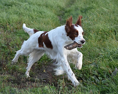 Tribble 8 x 10 stick retrieve 2-20.jpg