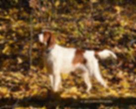1-Aran in woods DSC_0013.jpg