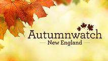 autumnwatchleaf.jpg