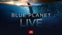BBC_Blue_Planet_Live_Copyright_BBC_13.jp