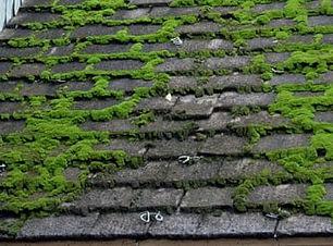 Moss Removal.jpg