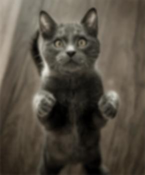 Curios Cat.png