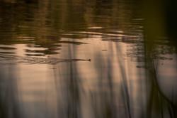 Schlange im See
