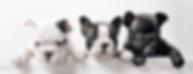 Puppy indicates Pawgram