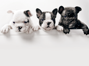 10 Ways to Avoid A Puppy Scam