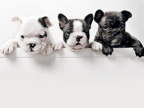 Pets and Custody