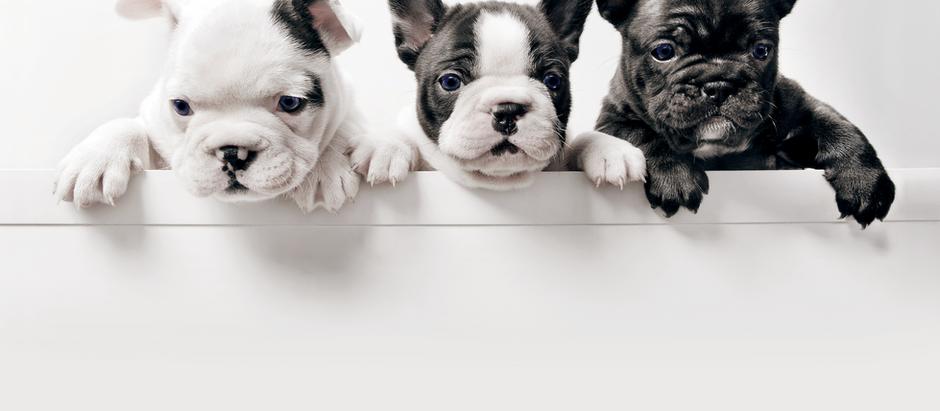 Dog Breed Standard - event summary post