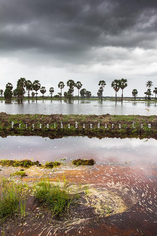 Jaffna in Rainy Season 2