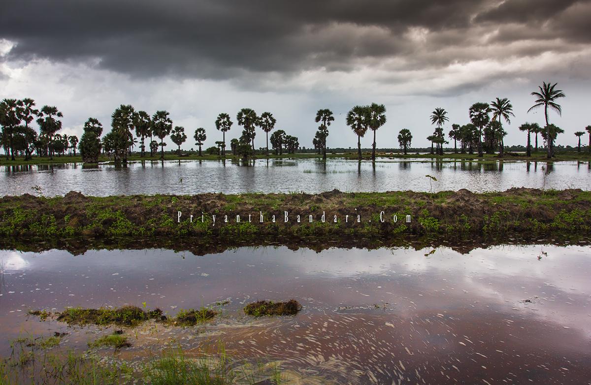 Jaffna in Rainy Season