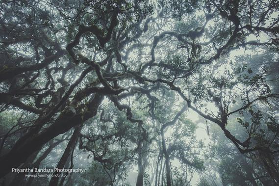 Foggy Thotupala Forest 1