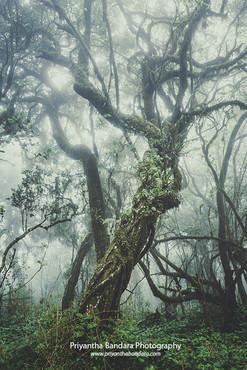 Foggy Thotupala Forest 3